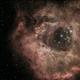 Rosette Nebula (NGC2244),                                Erik Stein