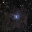 NGC 7023 Iris Nebula,                                Tom H