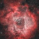 Rosette Nebula,                                Michele Campini