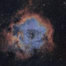 "NGC2244 ""Rosette Nebula"",                                John Massey"