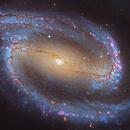 NGC 1300,                                Steven Marx