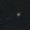 The Pinwheel Galaxy - Evostar 72ED,                                Nico Augustin