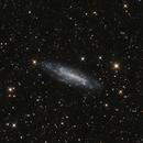 NGC 4236,                                Riedl Rudolf