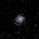 Pinwheel Galaxy M101 - Bortle 8 - NA140ssf first light,                                psychwolf