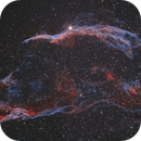 Western Veil Bi Colour,                                dave Barnard