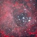 Rosette Nebula Cropped,                                Chris Price