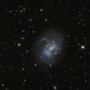 NGC 4395 - A Seyfert Galaxy,                                Niko Geisriegler