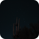 Big Dipper with Cactus,                                Dave