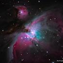 The Great Orion Nebula,                                Nicholas Tedford