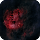 IC410 The Tadpoles Nebula (Starless),                                Randal Healey