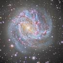 M83 Southern Pinwheel,                                AstroCHL2JPN (Masahiko Niwa, Eduardo, Carlos)