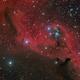 Cederblad 51 in the Head of Orion,                                Steve Milne
