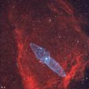 SH2-129 & Ou4 Flying Bat & Squid Nebula,                                Douglas J Struble