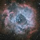 Rosette Nebula,                                Des