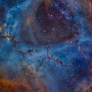 The heart of the rosette nebula,                                Christoph Lichtblau