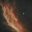California nebula bicolor,                                Mikael Wahlberg