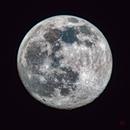 Red Cat Sees the Snow Moon,                                Daniel Erickson