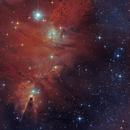 NGC2264  - the Cone, Christmas Tree, and Fox Fur  in Monoceros,                                  Arnaud Peel