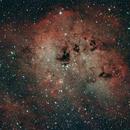 IC410 and the Tadpoles,                                John Sim