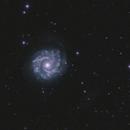NGC 3631,                                Josef Büchsenmeister