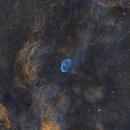 Crescent nebula (NGC6888) with neighborhood - SHO palette,                                Sasho Panov