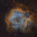 Caldwell 49 Rosette SHO,                                Arvid Emtegren