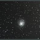 M 101 PINWHEEL GALAXY,                                Nina1955