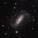 NGC 1808,                                Lee Borsboom