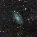 NGC 2403,                                Miles Zhou