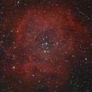 NGC 2244 - Rosette nebula,                                Andreas Reifke