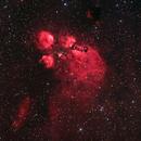 Cat's Paw Nebula,                                Jacek Bobowik