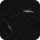 Whale and Hockey Stick in Canes Venatici,                                Elisabeth Milne