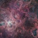 Tarantula Nebula (NGC 2070),                                Miles Zhou