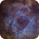 Rosette Nebula - Hubble Palette,                                Michael