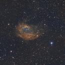 SH2-261 Lowers Nebula,                                John Massey