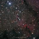 """IC 1396  """"la Nébuleuse de la trompe d'éléphant"""",                                Camille COLOMB"""