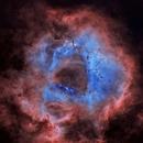 NGC-2238 The Rosette Nebula (Starless),                                Earl Hebert