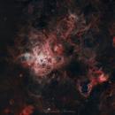A cosmic spider! Tarantula Nebula (30 Doradus),                                Fernando