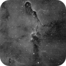 VDB 142 Trunk Nebula,                                S. DAVID