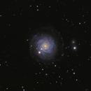 NGC 3344 LRGB,                                rhedden