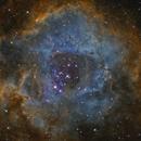Rosette Nebula,                                Jeff