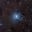NGC7023  - Iris Nebula in Cepheus,                                Stellario