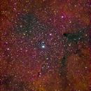 IC1396 Elephant Trunk Nebula,                                David McClain