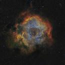 NGC 2238 - Nébuleuse de la Rosette en SHO,                                Valentin