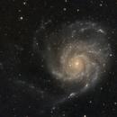 M101 - Pinwheel Galaxy,                                Ray's Astrophotography