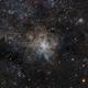 The Tarantula Nebula - C103,                                CarlosAraya