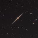 NGC 4565, The Needle Galaxy,                                Debra Ceravolo