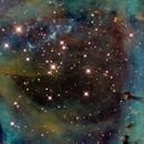 NGC 2244 - SHO,                                Peter Lipscomb
