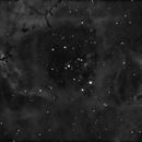 Rosette Nebula Ha,                                Mikeis79