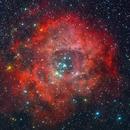 Rose Nebula,                                algl